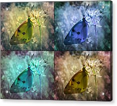 Lives Of A Butterfly Acrylic Print by Marianna Mills