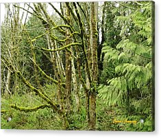 Acrylic Print featuring the photograph Livid Moss by Sadie Reneau