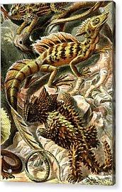 Lizard Detail II Acrylic Print by Unknown
