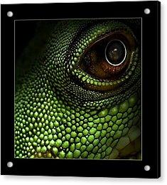 Lizard Eye Acrylic Print