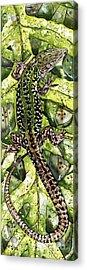 Lizard In Green Nature - Elena Yakubovich Acrylic Print by Elena Yakubovich