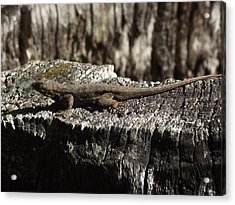 Lizard In Thought Acrylic Print by James Rishel