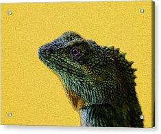 Lizard Acrylic Print by Karen Walzer