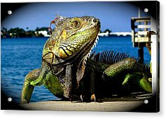 Lizard Sunbathing In Miami Acrylic Print by Monique Wegmueller