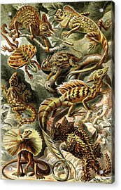 Lizards Lizards And More Lizards Acrylic Print by Unknown