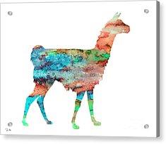 Llama Acrylic Print by Luke and Slavi