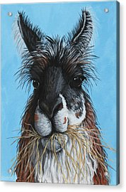 Acrylic Print featuring the painting Llama Portrait by Penny Birch-Williams