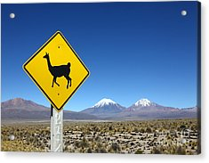 Llamas Crossing Sign Acrylic Print by James Brunker