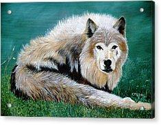 Lobo Acrylic Print