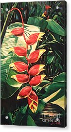 Lobster Claw Heliconia Acrylic Print by John Clark