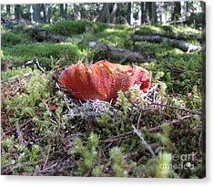 Lobster Mushroom Acrylic Print by Leone Lund