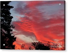Lobster Sky Acrylic Print by Barbara Griffin