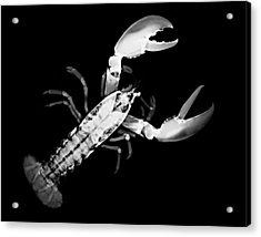 Lobster Acrylic Print by William A Conklin