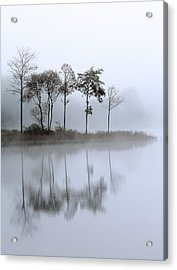 Loch Ard Trees In The Mist Acrylic Print by Grant Glendinning
