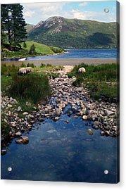 Loch Ba Acrylic Print by Steve Watson