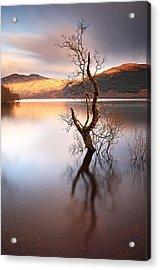 Loch Lomond Tree Acrylic Print