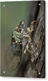 Acrylic Print featuring the photograph Locust by Susan D Moody