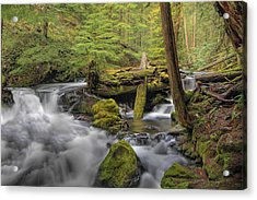 Log Jam Acrylic Print by David Gn