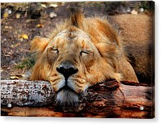 Logged Out Acrylic Print by Larry Trupp
