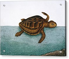 Loggerhead Turtle Acrylic Print by Natural History Museum, London