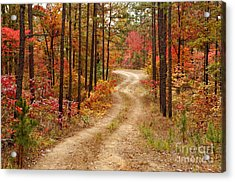 Logging Road In The Ouachita National Forest - Beaver's Bend State Park - Poteau - Oklahoma Arkansas Acrylic Print by Silvio Ligutti