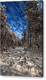 Acrylic Print featuring the photograph Logging Trail  by John Harding
