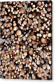 Logs Acrylic Print by Michel Mata
