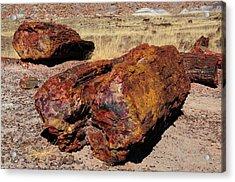 Logs, Petrified Forest National Park Acrylic Print