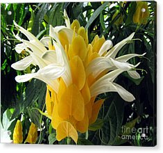 Lolliepop Plant Acrylic Print