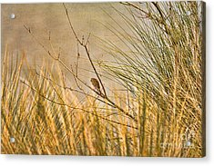 Acrylic Print featuring the photograph Lone Bird by Anne Rodkin
