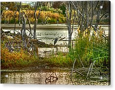 Lone Blue Heron In Fall Acrylic Print by Kimberleigh Ladd