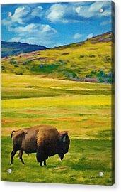 Lone Buffalo Acrylic Print by Jeffrey Kolker
