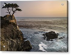 Acrylic Print featuring the photograph Big Sur - Lone Cypress by Francesco Emanuele Carucci