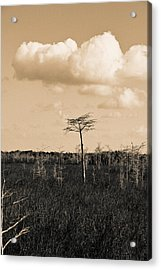 Acrylic Print featuring the photograph lone cypress III by Gary Dean Mercer Clark