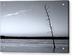 Lone Cypress Acrylic Print