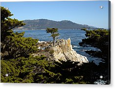Lone Cypress On 17-mile Drive  Acrylic Print