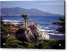 Lone Cypress Acrylic Print by Rod Jones