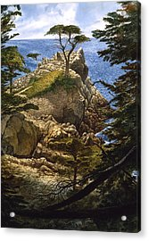 Lone Cypress Acrylic Print by Tom Wooldridge
