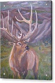 Lone Elk Acrylic Print by Caroline Owen-Doar