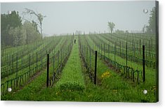 Lone Figure In Vineyard In The Rain On The Mission Peninsula Michigan Acrylic Print