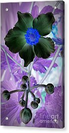 Lone Flower 1 Acrylic Print by Chalet Roome-Rigdon