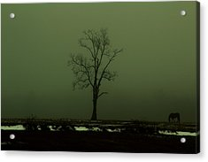 Lone Horse Acrylic Print by Andrea Galiffi