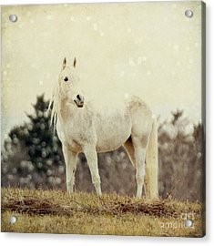 Lone Horse Acrylic Print by Diane Miller