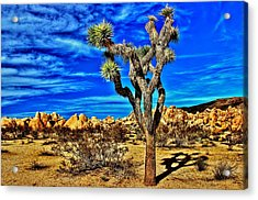 Acrylic Print featuring the photograph Lone Joshua by Benjamin Yeager