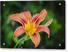 Acrylic Print featuring the photograph Lone Lily by Bradley Clay