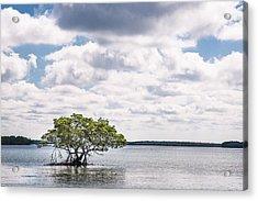 Lone Mangrove Acrylic Print by Adam Pender