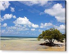 Lone Mangrove Tree Florida Keys Acrylic Print