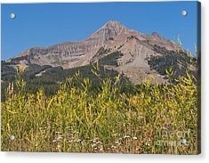 Lone Mountain And Wildflowers Acrylic Print