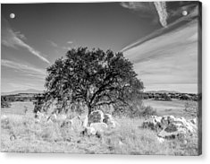 Acrylic Print featuring the photograph Lone Oak by Robert  Aycock