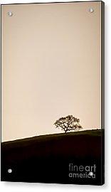 Lone Oak Tree Acrylic Print by Holly Martin